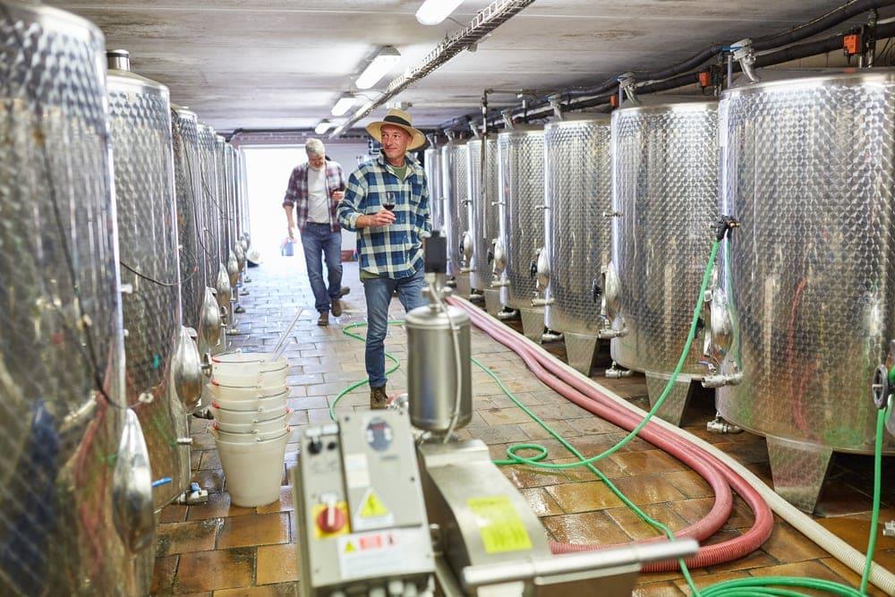 Mietkälte zur Weinerzeugung